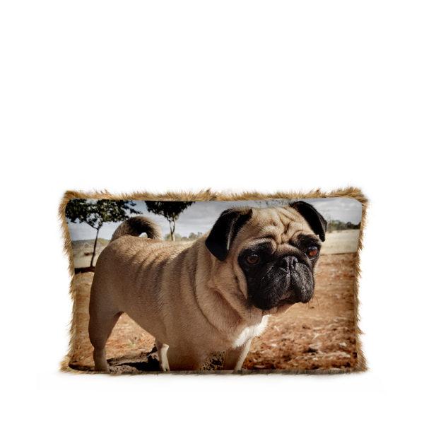 Print your pet photo
