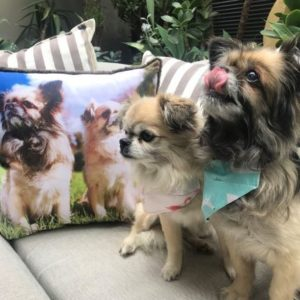 Personalised Pet Photo Pillow - Keepsakes of Love