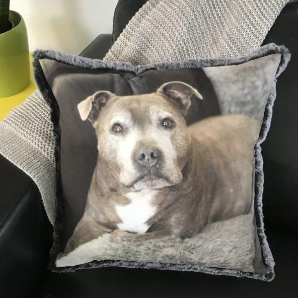 Custom Pet Photo Cushion - Staffy