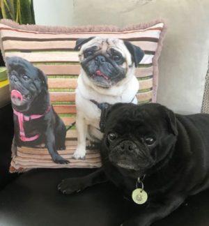 Pet Photo Print Pillows - Pugs